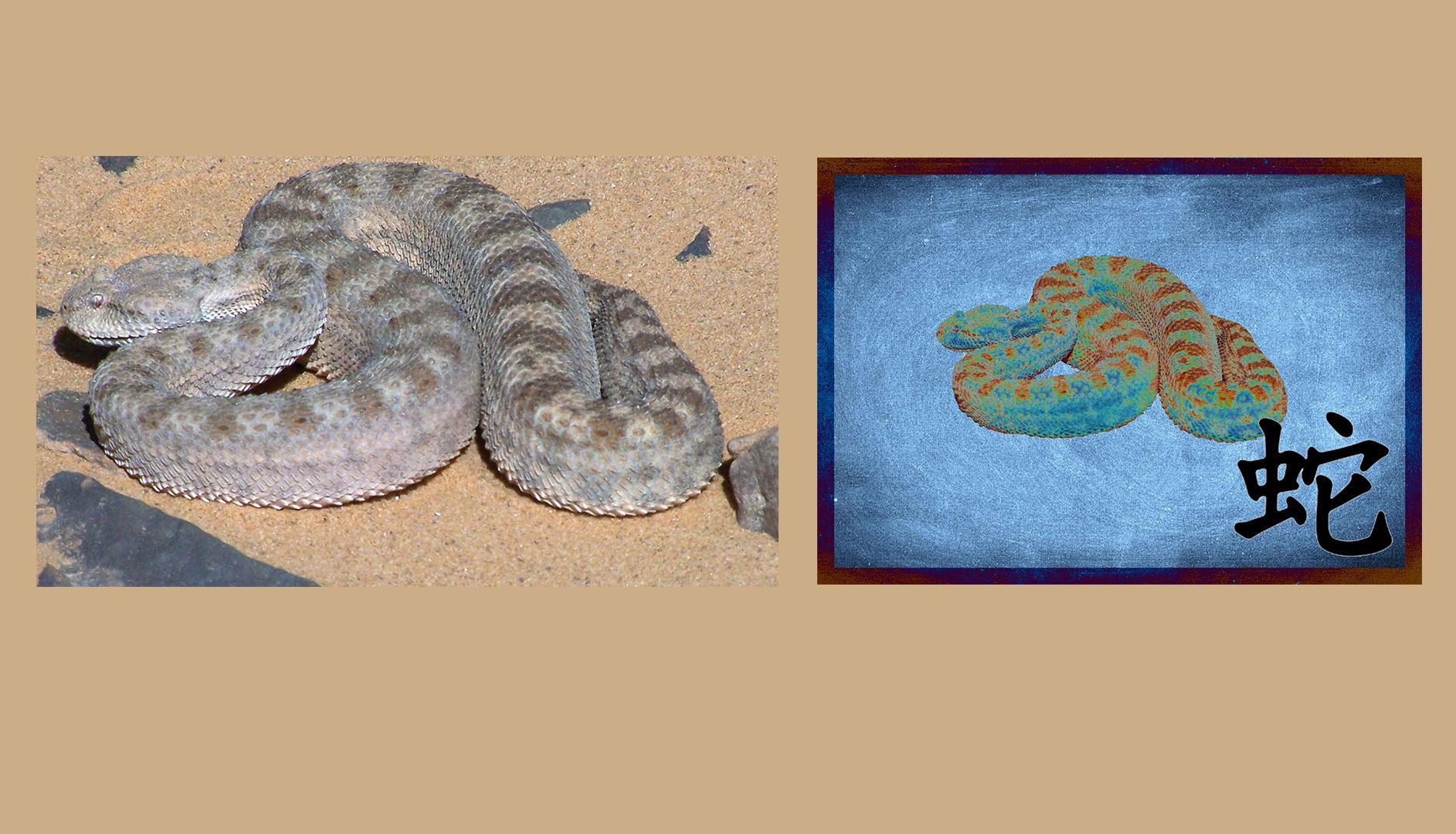 Serpent du désert de Lybie - Masque de fusion Photoshop d'après photographie Yves MARTIN-GARIN